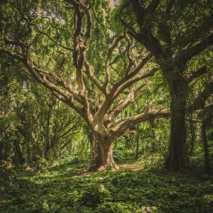 bescherm-bomen-druk-natuur