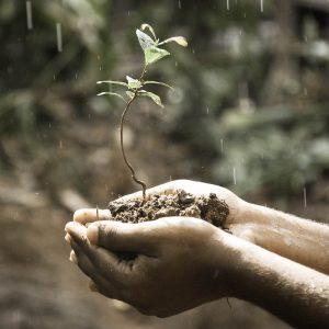 ecologisch-verantwoord-boom-groeien